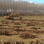 Plantación de sotos