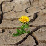 Un halo de esperanza frente a una sequía de niveles históricos
